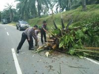 Ganggu Kelancaran Lalulintas, Polantas Bersihkan Pohon Tumbang